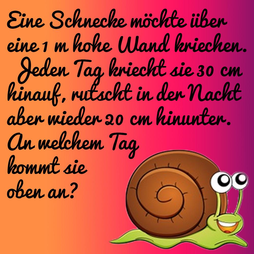 Schnecken-Rechen